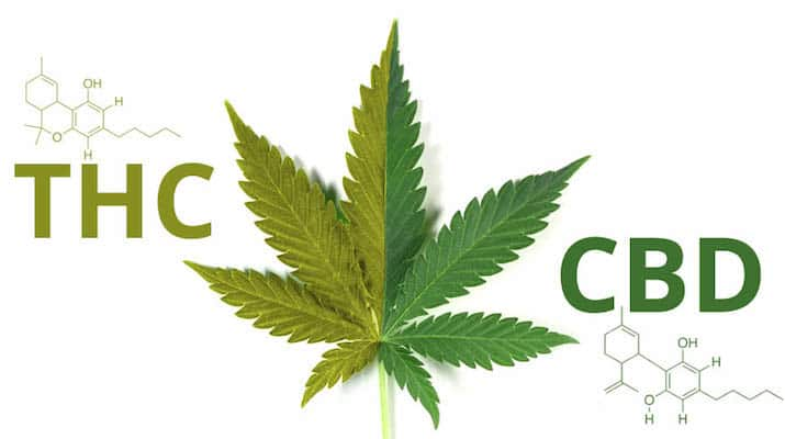 Does CBD work best with THC