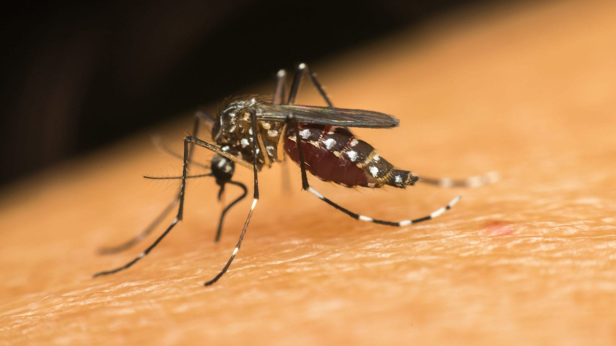 Home remedies to get rid of malaria parasite