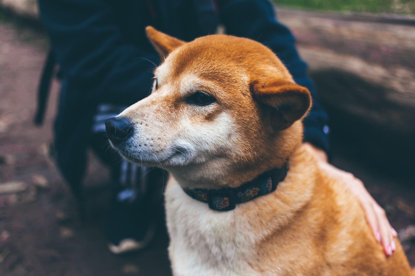 How do flea collars work and how do I decide which one to buy?