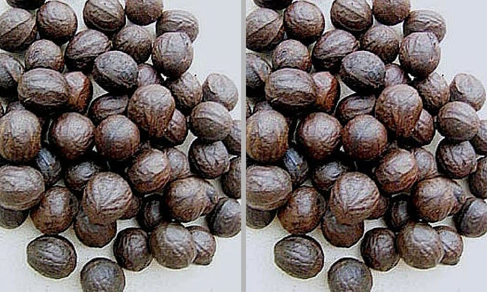 Health benefits African walnut