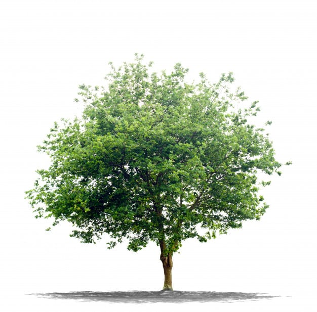 Tips for hiring a tree maintenance service