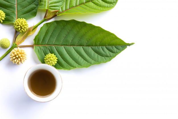 Essential points of differences between a White Elephant, White Maeng Da, and White Borneo Kratom